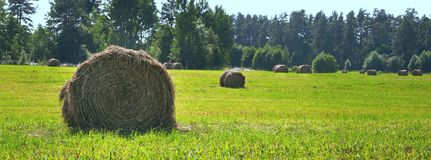 Landscape in the summer with bales of hay on the field. Panorama. Large format. Landscape in the summer with bales of hay on the field. Panorama, banner stock image