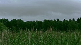 Landscape summer forest and field timelapse. Green forest and summer nature stock video footage