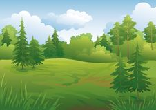 Landscape, summer forest Stock Photography