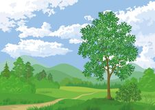 Landscape, summer forest and maple tree Royalty Free Stock Images