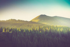 Landscape summer forest and mountain peak under morning. Royalty Free Stock Photo