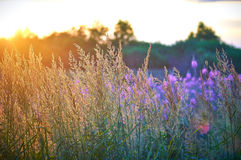Landscape. Summer herbs and flowers yellow and violet background Stock Photography