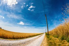 Landscape in summer with lonely road. Through golden cornfields stock image