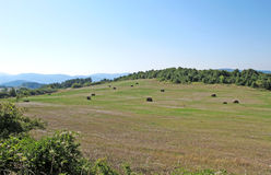 Landscape of summer mountain meadows and fields Royalty Free Stock Image