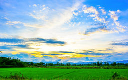 Landscape of summer mountains and green field and blue sky. Rice. Fields in Thailand And mountain backdrop Royalty Free Stock Photography