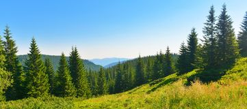 Landscape of summer mountains in sunny weather. View of mountain conifer forest in sunny highland stock images
