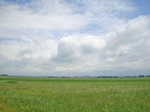 Landscape summer rustic.white clouds over a green field Stock Images