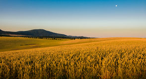 Landscape at sun with fields and trees Royalty Free Stock Image