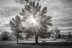 Landscape with sun shining though trees Royalty Free Stock Photo