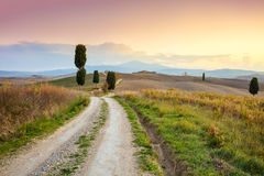 Landscape at sundown time - ground road and beautiful cypresses Stock Image