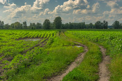 Landscape with sunflower fields and country road in central Ukraine Royalty Free Stock Photos