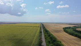 Landscape of sunflower, wheat fields and road