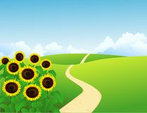 Landscape with sunflowers Royalty Free Stock Photo