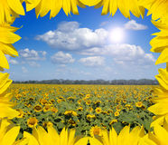 Landscape of sunflowers in leafes frame. Beautiful landscape of sunflowers in leafes frame Royalty Free Stock Photo
