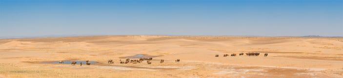Landscape of sunlit desert. Beautiful landscape of sunlit desert with camels Royalty Free Stock Photography