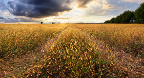 Landscape, sunny dawn in a field and meadow Stock Image