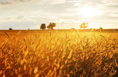 Landscape, sunny dawn in a field and meadow Stock Images