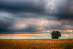 Landscape, sunny dawn in a field and meadow Royalty Free Stock Photo