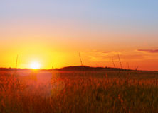 Landscape, sunny dawn in a field Stock Photography
