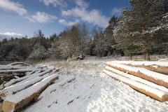 Landscape on a sunny day Stock Photo