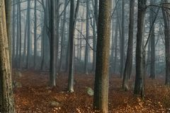 Autumn forest. Landscape of sunrise in autumn foggy morning. royalty free stock photography