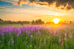 Landscape with sunrise  and  blossoming meadow Stock Photos