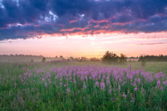 Landscape with the sunrise, a blossoming meadow and fog Royalty Free Stock Image
