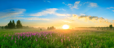 Landscape with the sunrise, a blossoming meadow  panorama Royalty Free Stock Photos