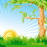Landscape with a Sunrise and large tree stock illustration