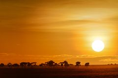 Landscape with sunrise on the savanna Royalty Free Stock Images