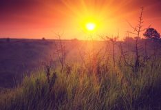 Landscape sunrise at summer. Foggy morning on meadow. Stock Images