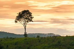 Landscape of sunset. With cloudy orange sky and a silhouette of tree Royalty Free Stock Photo