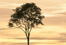 Landscape of sunset. With cloudy orange sky and a silhouette of tree Royalty Free Stock Photos