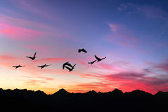 Landscape during sunset and flying birds Stock Photo