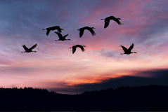 Landscape during sunset with flying birds Stock Photo