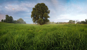 Landscape sunset with fog in a field with single oak tree grass  horizontal background Stock Images