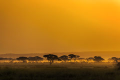 Landscape at sunset in Kenya, Africa. Royalty Free Stock Images