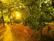 Sunset light front landscape in autumn park. Landscape sunset light front park autumn trees fallen leaves Royalty Free Stock Images