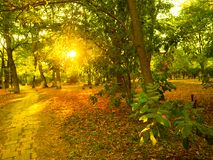Sunset light front landscape in autumn park. Landscape sunset light front park autumn trees fallen leaves Royalty Free Stock Image