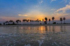 Landscape sunset and Palm Tree at Phetchaburi , Thailand Royalty Free Stock Photography