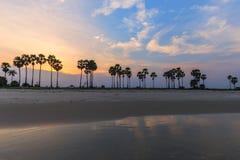 Landscape sunset and Palm Tree at Phetchaburi , Thailand Royalty Free Stock Image