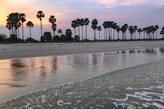 Landscape sunset and Palm Tree at Phetchaburi , Thailand Royalty Free Stock Images
