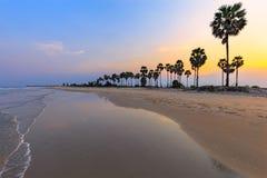 Landscape sunset and Palm Tree at Phetchaburi , Thailand Stock Images