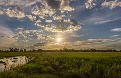 Landscape sunset on rice field with beautiful blue sky and clouds reflection in water. Thai nature landscape sunset on rice field with beautiful blue sky and Royalty Free Stock Photography