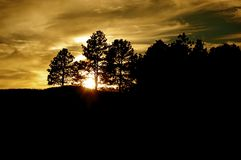 Landscape of Sunset Searing through Pine Trees. Timeless sunset searing through pine trees in the forest at dusk Stock Photography