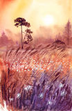 Landscape sunset in summer field watercolor illustration. Background landscape beautiful sunset in summer field with grass and flowers in a gentle orange and Stock Photos