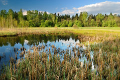 Landscape with swamp Royalty Free Stock Photography