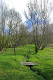 Landscape swamp footbridge Royalty Free Stock Images