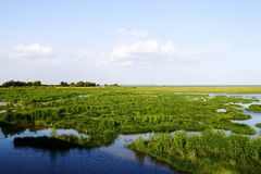 Landscape of swamp, Thailand Royalty Free Stock Photo