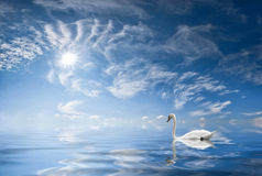 Landscape with a swan Stock Photography